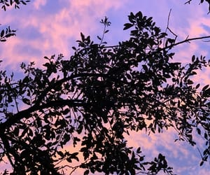 blue, pink, and serenity image