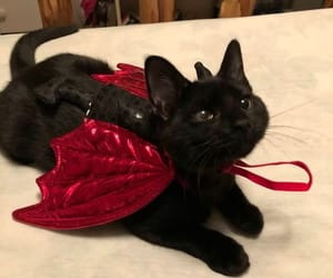 cat, cute, and Devil image