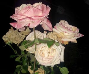 flowers, roses, and fleur image
