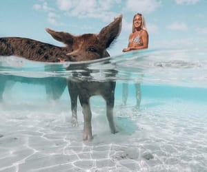 animal, bahamas, and oceano image