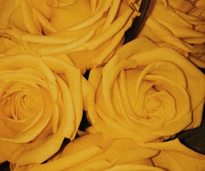 roses, vintage, and yellow image