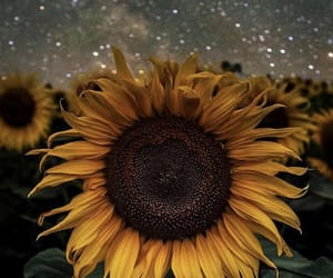 sunflower, background, and wallpaper image