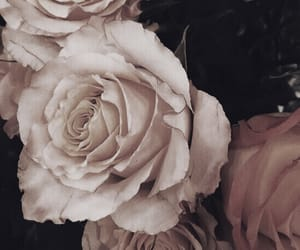flowers, roses, and valentine image
