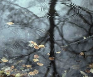 rain, autumn, and photography image