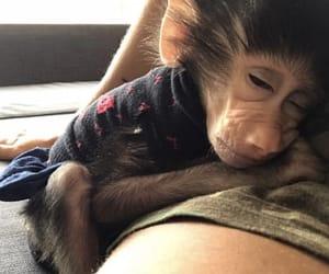 baboon, beautifulgirl, and brunette image