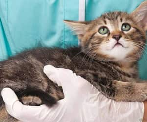 kidney failure in cats image