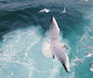 bird and sea image