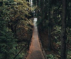 aesthetic, foliage, and sheet image