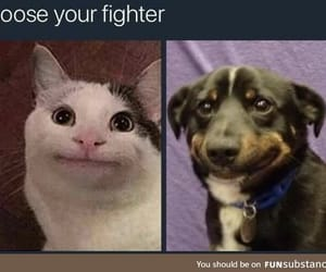 awesome, choose, and fighter image