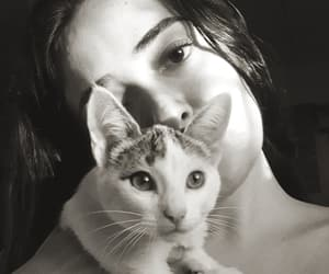 aesthetic, black and white, and cat image