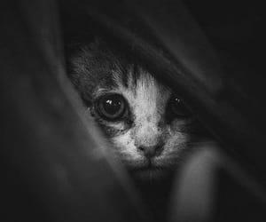Image by Alexandra Nousia