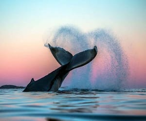 whale, nature, and animal image