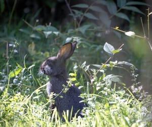 animal, bunny, and pet image