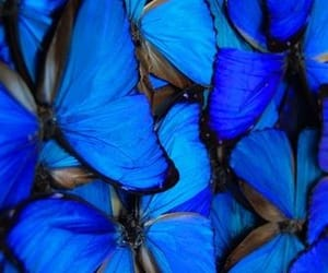 blue and butterflies image