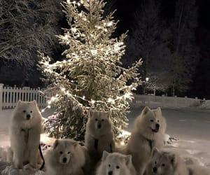 dog, animal, and christmas image