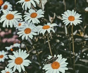 butterfly, daisy, and flowers image