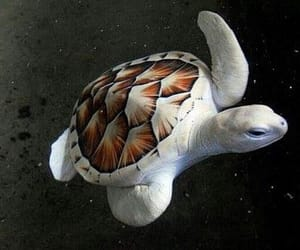 turtle and animal image