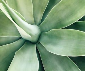 green, planta, and naturaleza image
