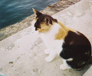 baby cat, cat, and jm image