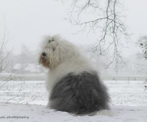 animals, pets, and winter image
