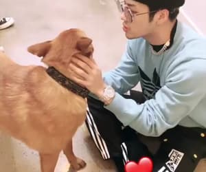 dog, puppy, and got7 image