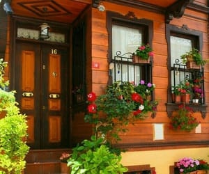 colorful, flowers, and istanbul image