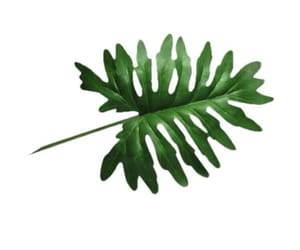 plant, Polyvore, and pngs image