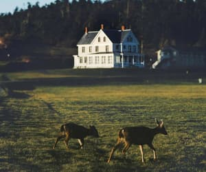 country living, rural, and deer image