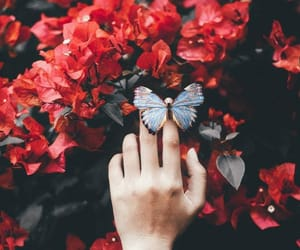 flowers, butterfly, and red image