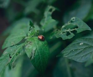beautiful, click, and ladybug image