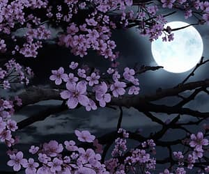 flowers, full moon, and gif image