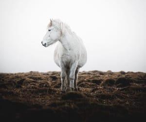 animals, canon, and pony image