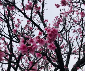 beautiful, 桜, and flower image