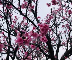 beautiful, sakura, and 春 image