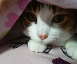 animal, gato, and mirada image