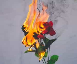 aesthetic, rose, and fire image