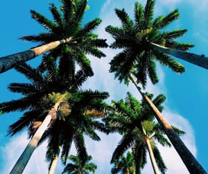 good, nature, and palm image
