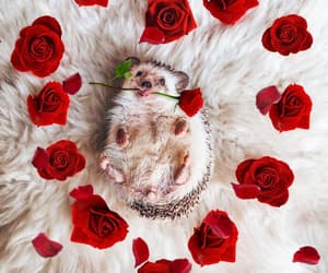 animal and rose image