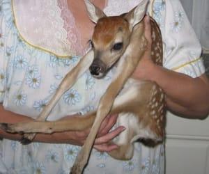 deer, animal, and cute image