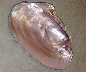 pink, shell, and tumblr image