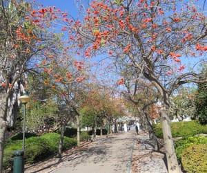 andalucia, espana, and park image