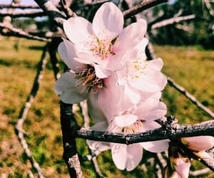 almond, art, and bee image