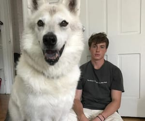big dog, dogs, and husky image
