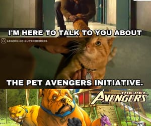 Avengers, cat, and funny image