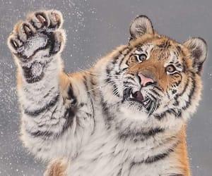 animal, nature, and wildlife image