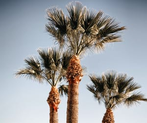 palm tree, love, and summer image