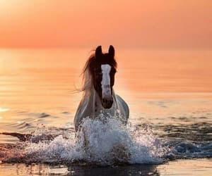 animals, horse, and sunset image