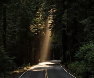 alternative, nature, and sunshine image