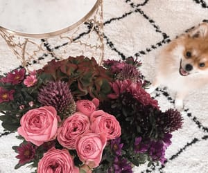 decoration, dog, and flowers image