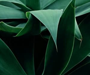 plants, green, and background image